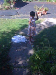 "Lily enjoying the freezer ""snowfall"""