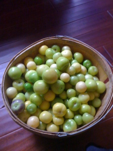 tomatillos husked and ready to process